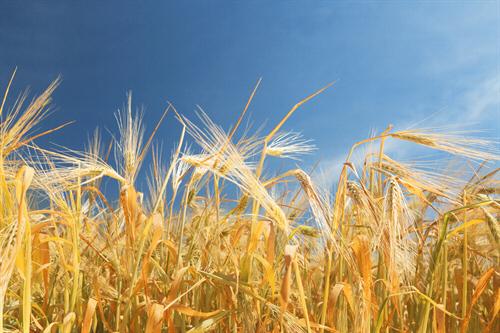 Usuwanie folii rolniczych oraz innych odpadów pochodzących z działalności rolniczej