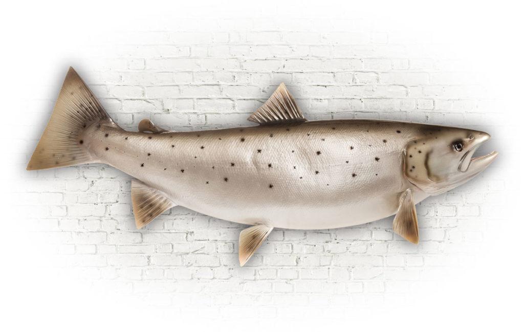 Święto Ryby już w czerwcu!